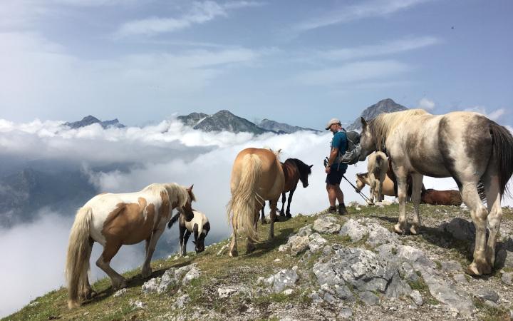 wild horses monte matanna apuane alps Tuscany Italy