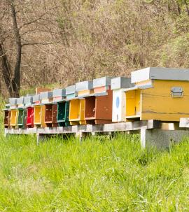 Bee Hives Col di Lavacchio Tuscany Italy