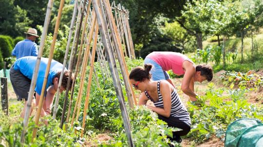 Vegetable garden Col di Lavacchio Tuscany Italy